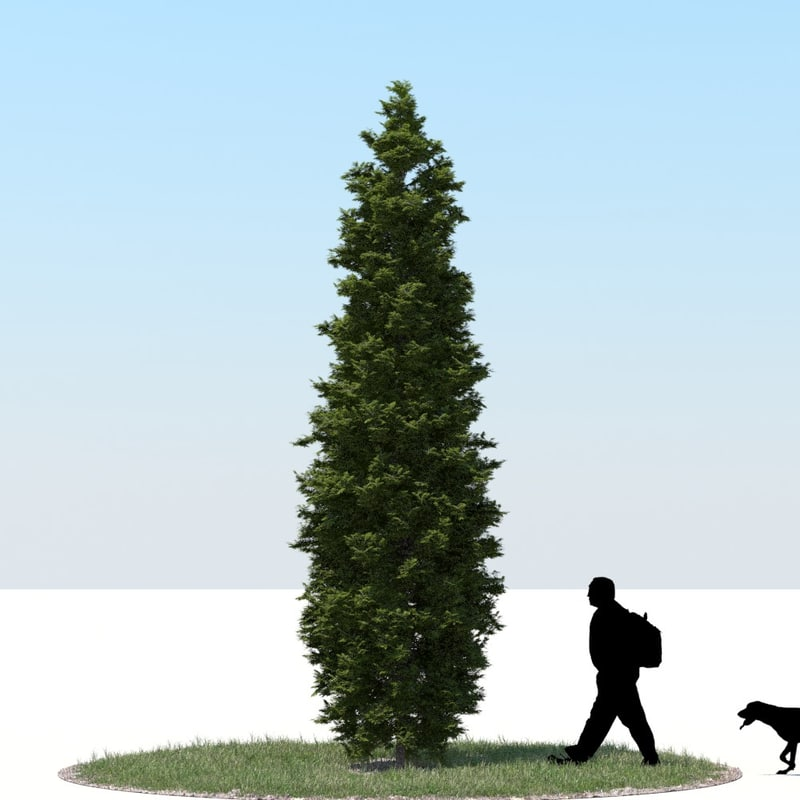 3d model realistic thuja tree