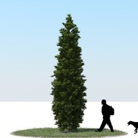 3d model realistic thuja tree