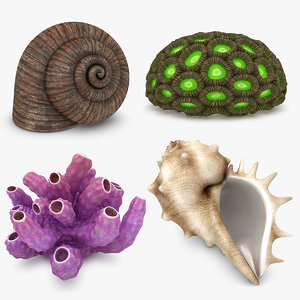 shell coral set 3d model