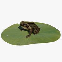 british frog 3d model