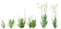 Iris domestica png