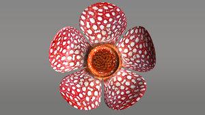 rafflesia flowering 3d model