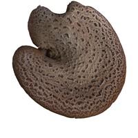 wood mushroom flake