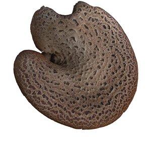 3ds max mushroom wood