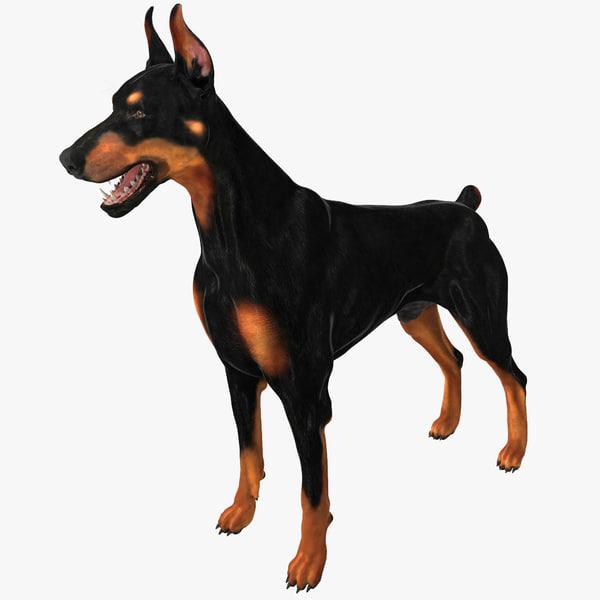 doberman dog 3d 3ds