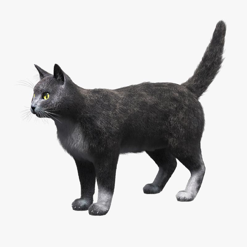 domestic cat gray fur 3d max