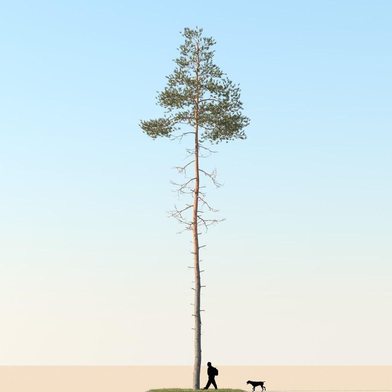 3dsmax realistic pine tree