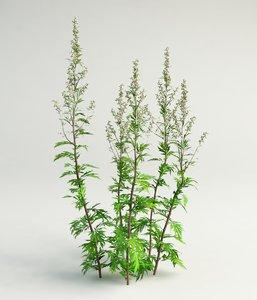 obj mugwort grass