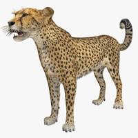 Cheetah 2 Fur Rigged