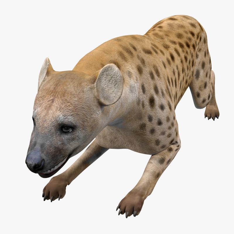 hyena pose 5 3d model