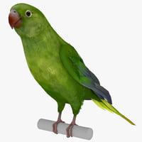 parakeet pose 2 3d model
