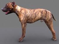 pitbull dog 3d max