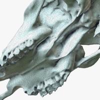 3d cow skull 2 model