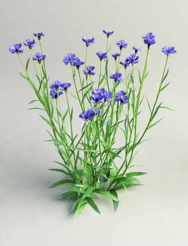3d model of cornflower flower