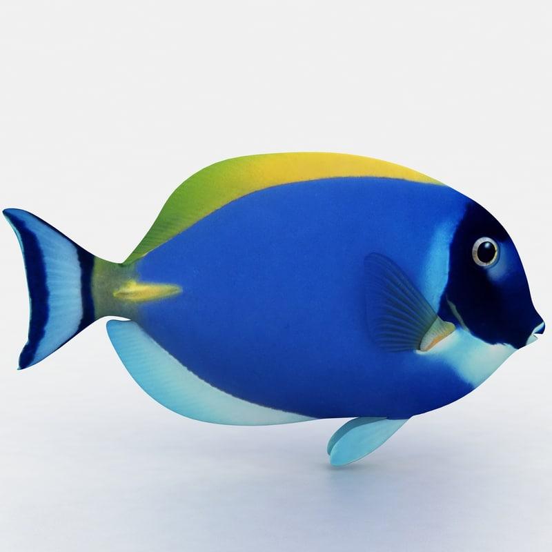 tang blue fish 3d max