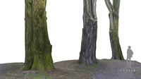 3dsmax acacia tree