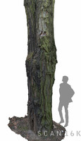 3ds max acacia tree 2