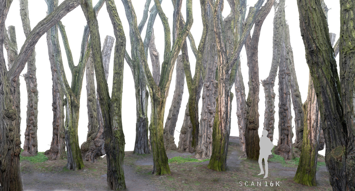 3d model trees forest nature