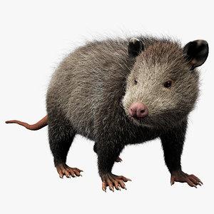 max possum fur pose