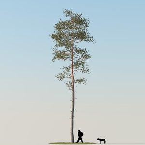 realistic pine tree max