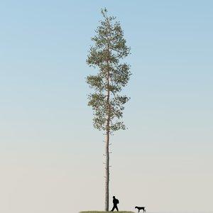 realistic pine tree 3d model