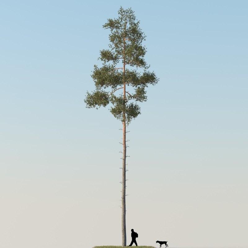 realistic pine tree 3d max
