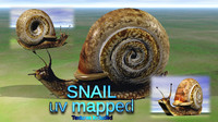 Snail By Dragoncatpro