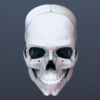 skull 3d max