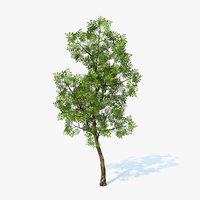 generic tree 3d obj