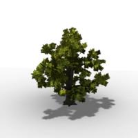 oak-tree lod level 3d model