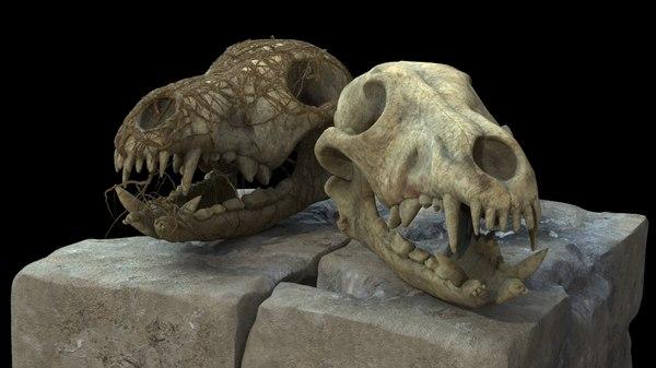 coyote skull 3d max