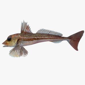 gurnard fish max