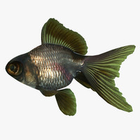 3d model of moor goldfish