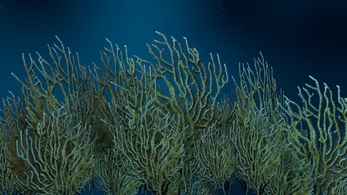 gorgonacea gorgonians alcyonacea 3d model