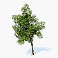 generic tree 3d model
