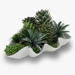 succulent giant clam 3d max