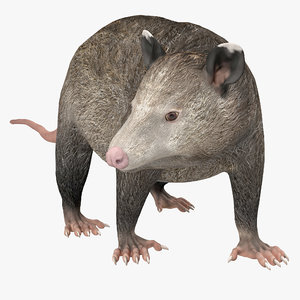 possum pose 3d model
