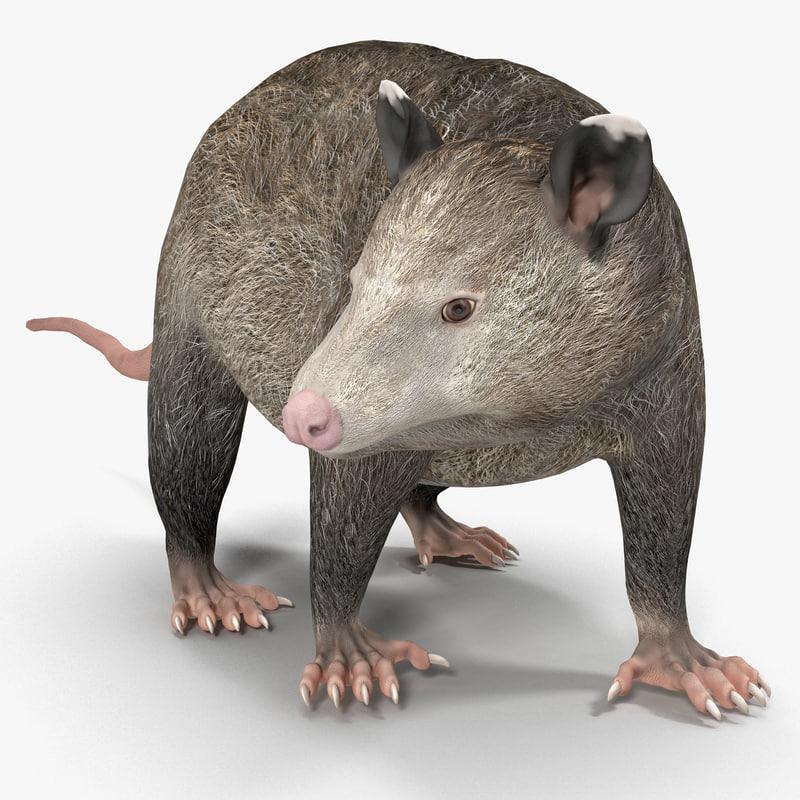 possum pose 3d model