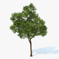 Tree Generic 03