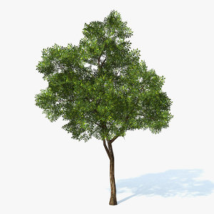 max generic tree
