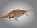 Ichthyosaurus 3D models