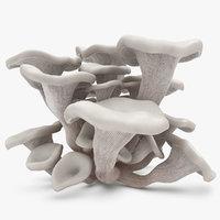 oyster mushroom white 3d model