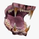animal teeth 3D models