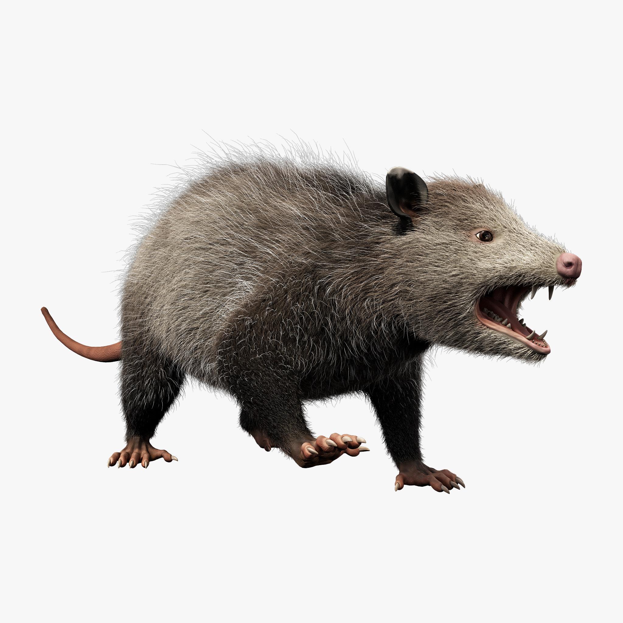 possum fur rigged 3d max