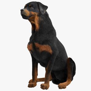 rottweiler pose 4 fur 3d model