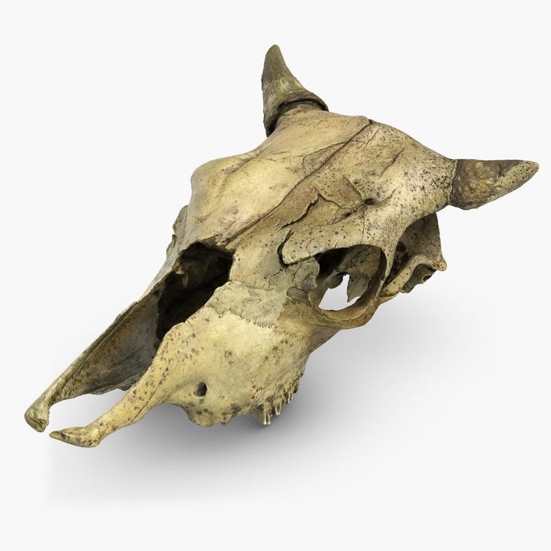 s max cow skull
