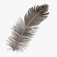 bird feather 3d 3ds