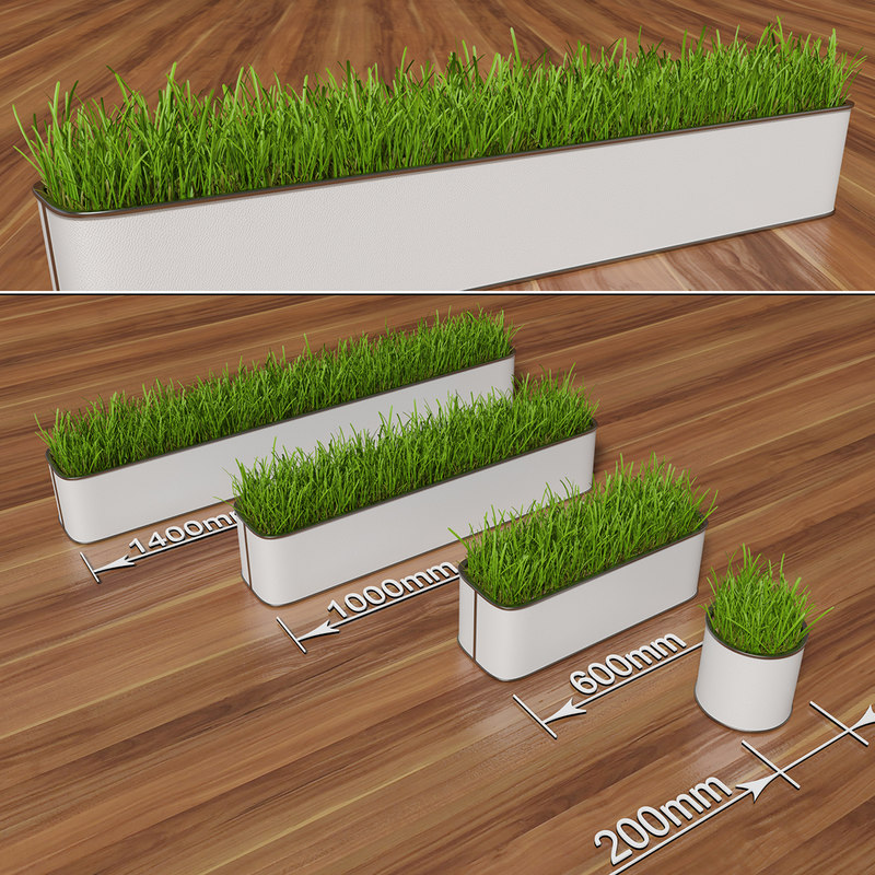 max decorative grass pot plant flowers