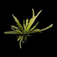 3d alghe model