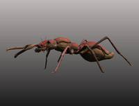 3dcoat ant obj